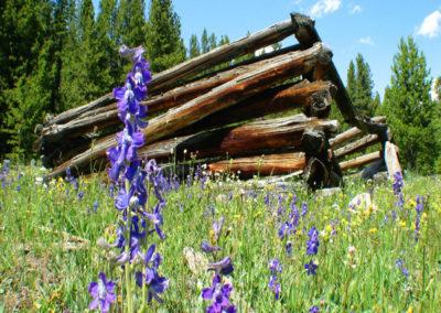 71105 melrose 7811 cabin larkspur_MontanaPictures_Net